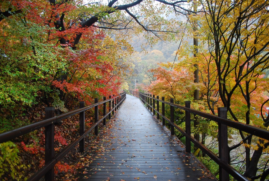Naejangsan: Beautiful Even When Raining