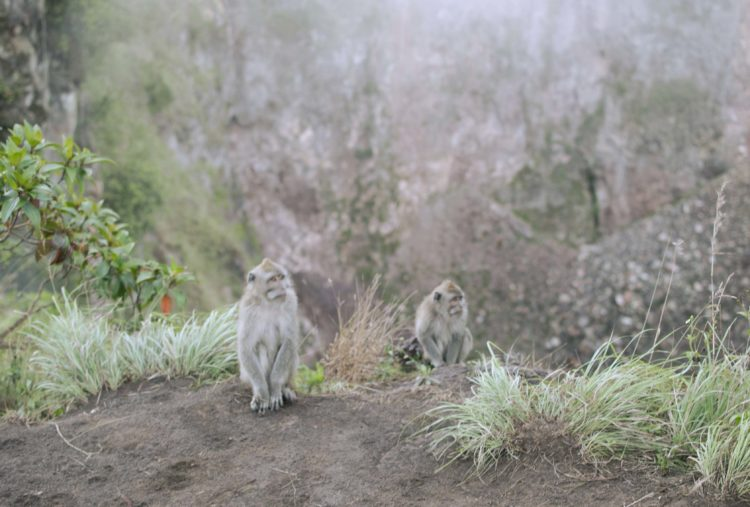 mount-batur-sunrise-monkeys