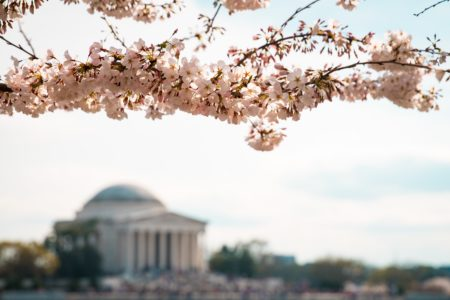 The US's capital city is one of the most popular destinations in the country! Check out this local guide to Washington DC for all the best things to do!
