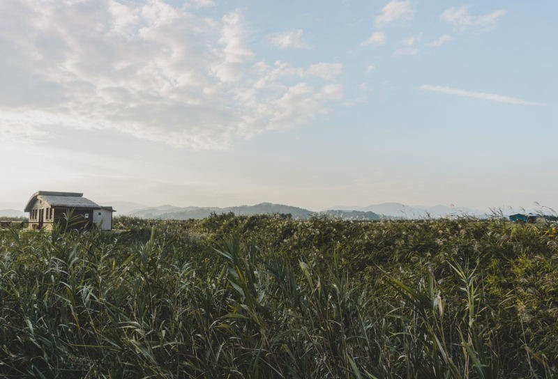 Suncheon Bay is one of Korea's best natural landmarks! Down in Jeollanamdo, here's how you can visit this beautiful wetland.