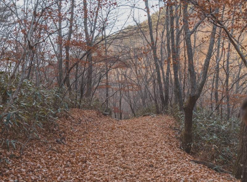 jogyesan hiking trail