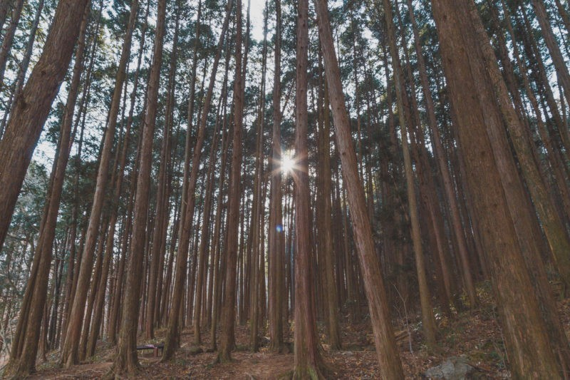 hiking jogyesan, forest