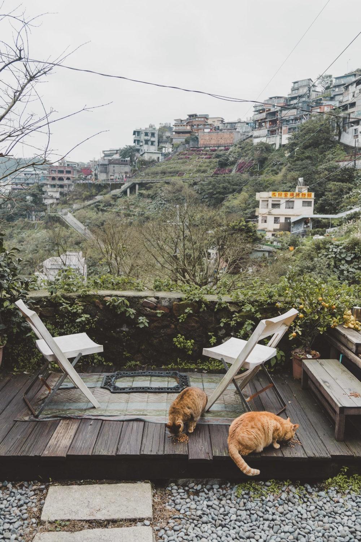 jiufen cats taiwan