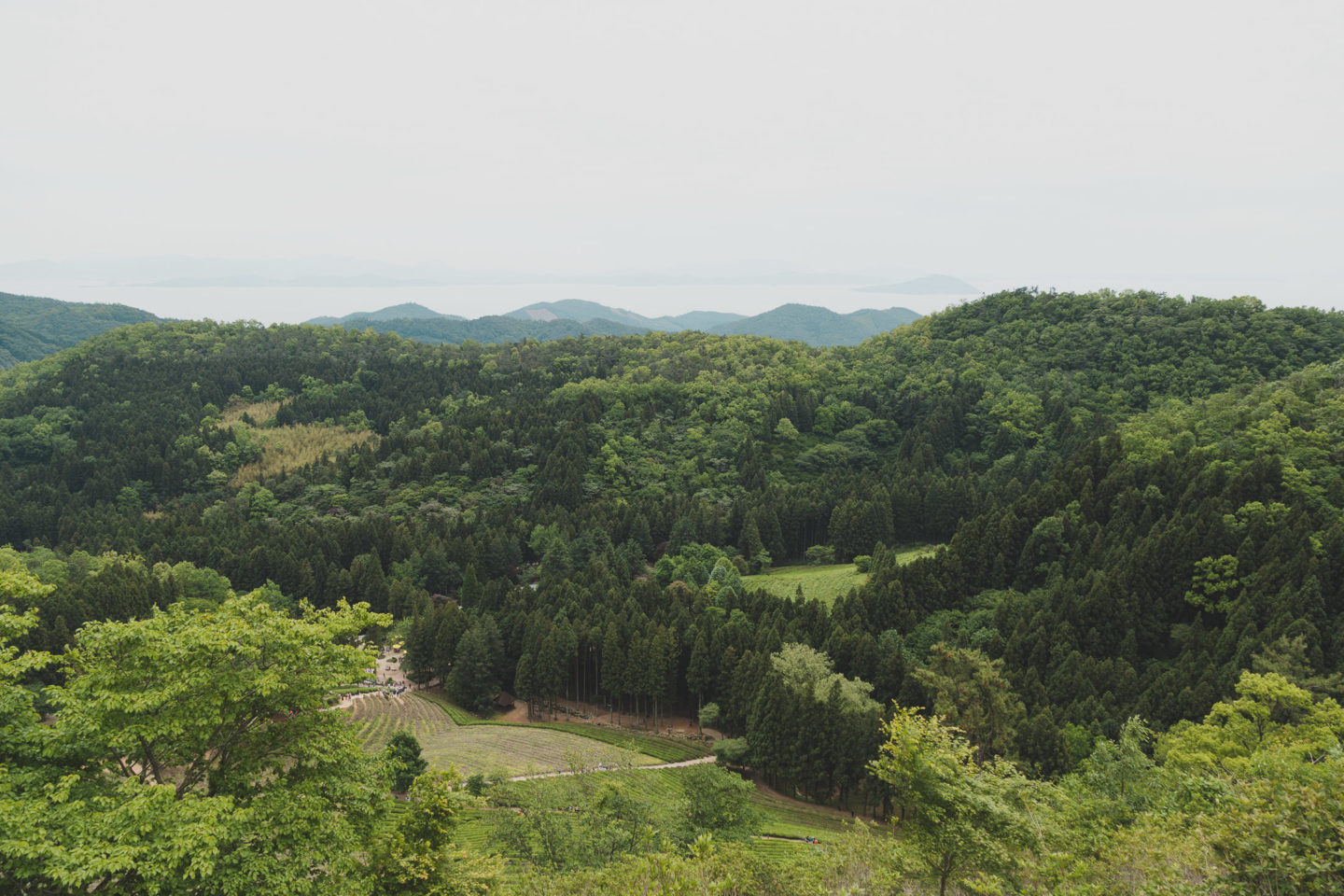 view of boseong from the top of the fields looking out to the sea