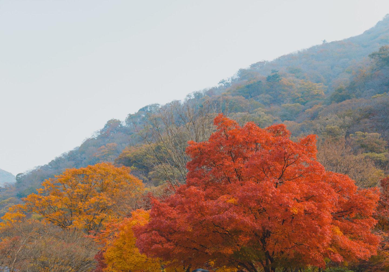 Autumn foliage in Korea
