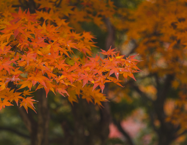 Autumn in Korea 2019: Forecast, Food, Festivals, and More