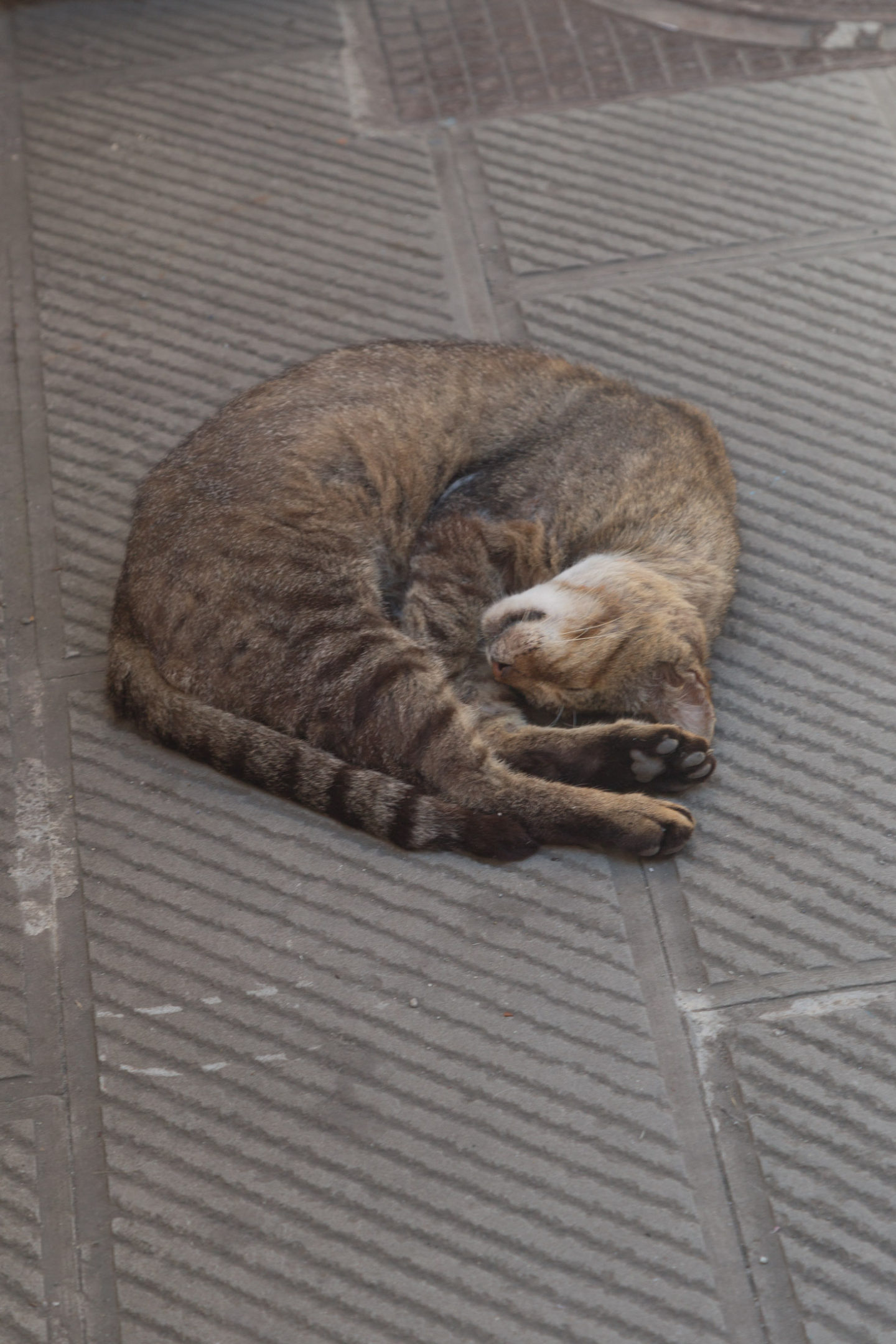 gray striped cat sleeping on cement ground