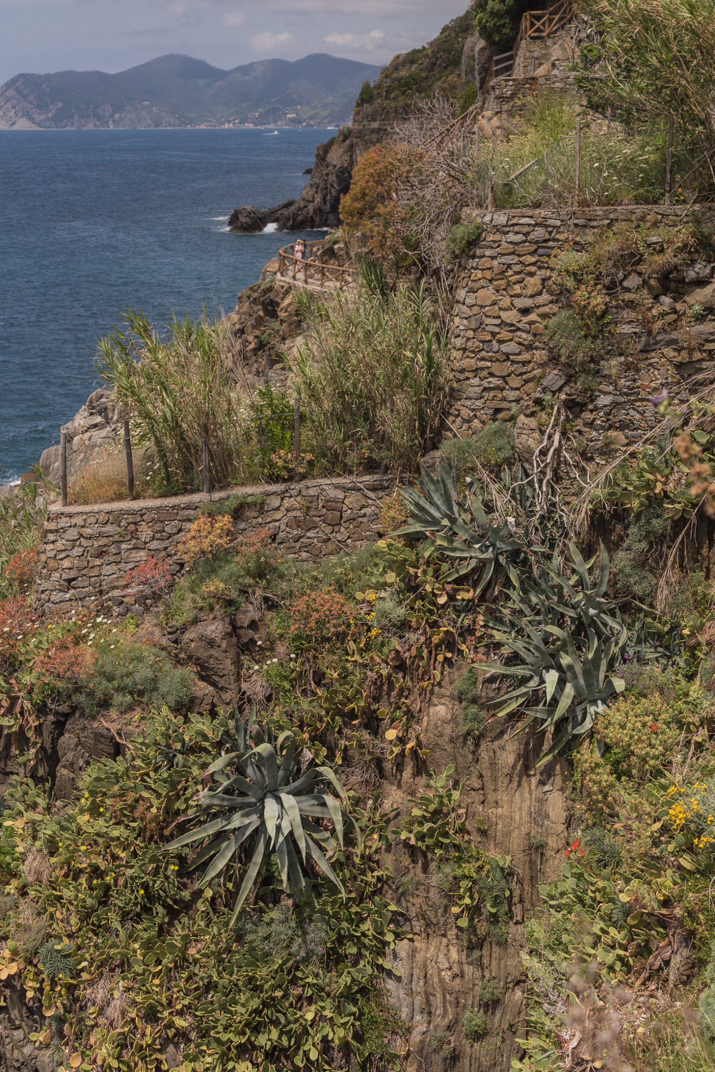 succulent plants across a cliffside, can see some blue sea in the corner