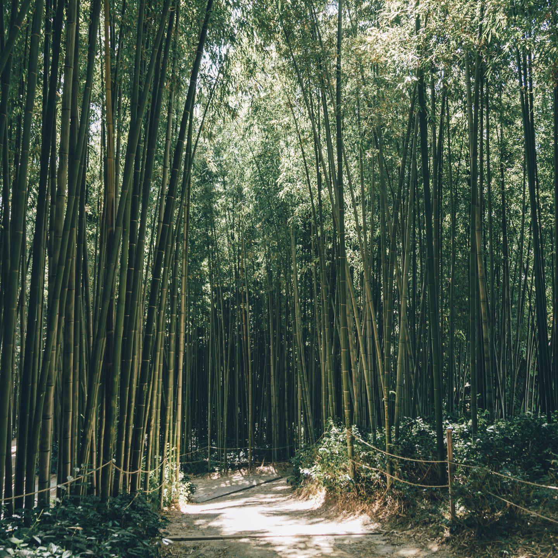 Damyang Travel Guide