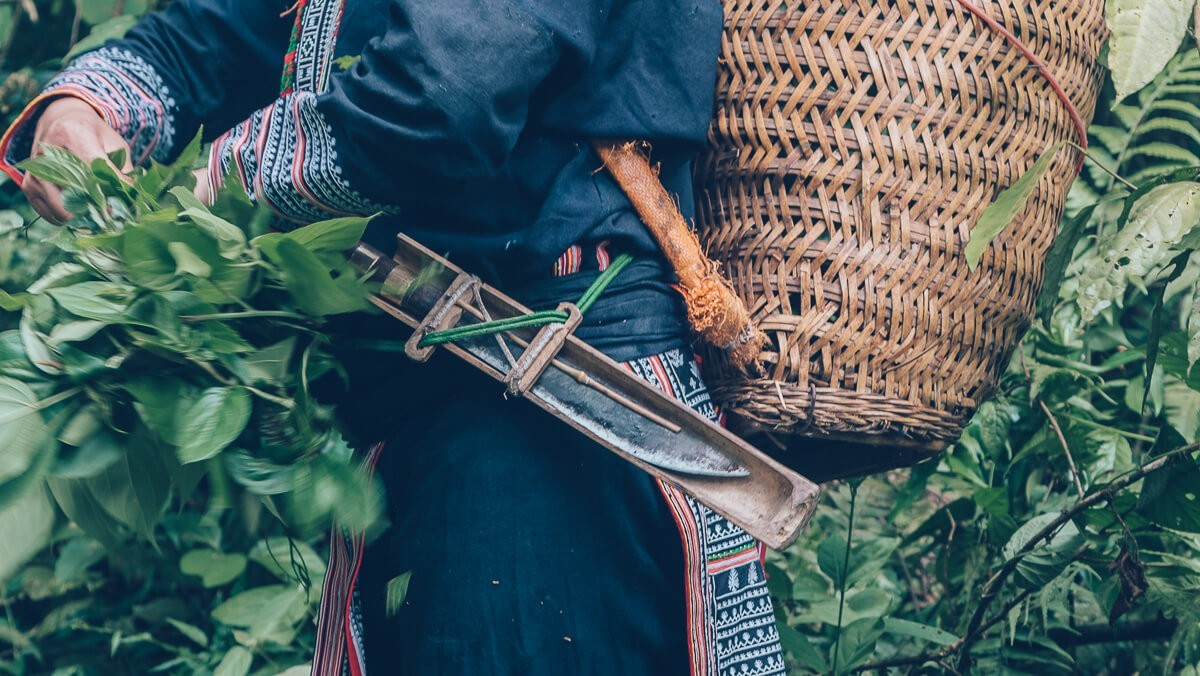 Foraging with the Red Dzao Tribe, Sapa, Vietnam