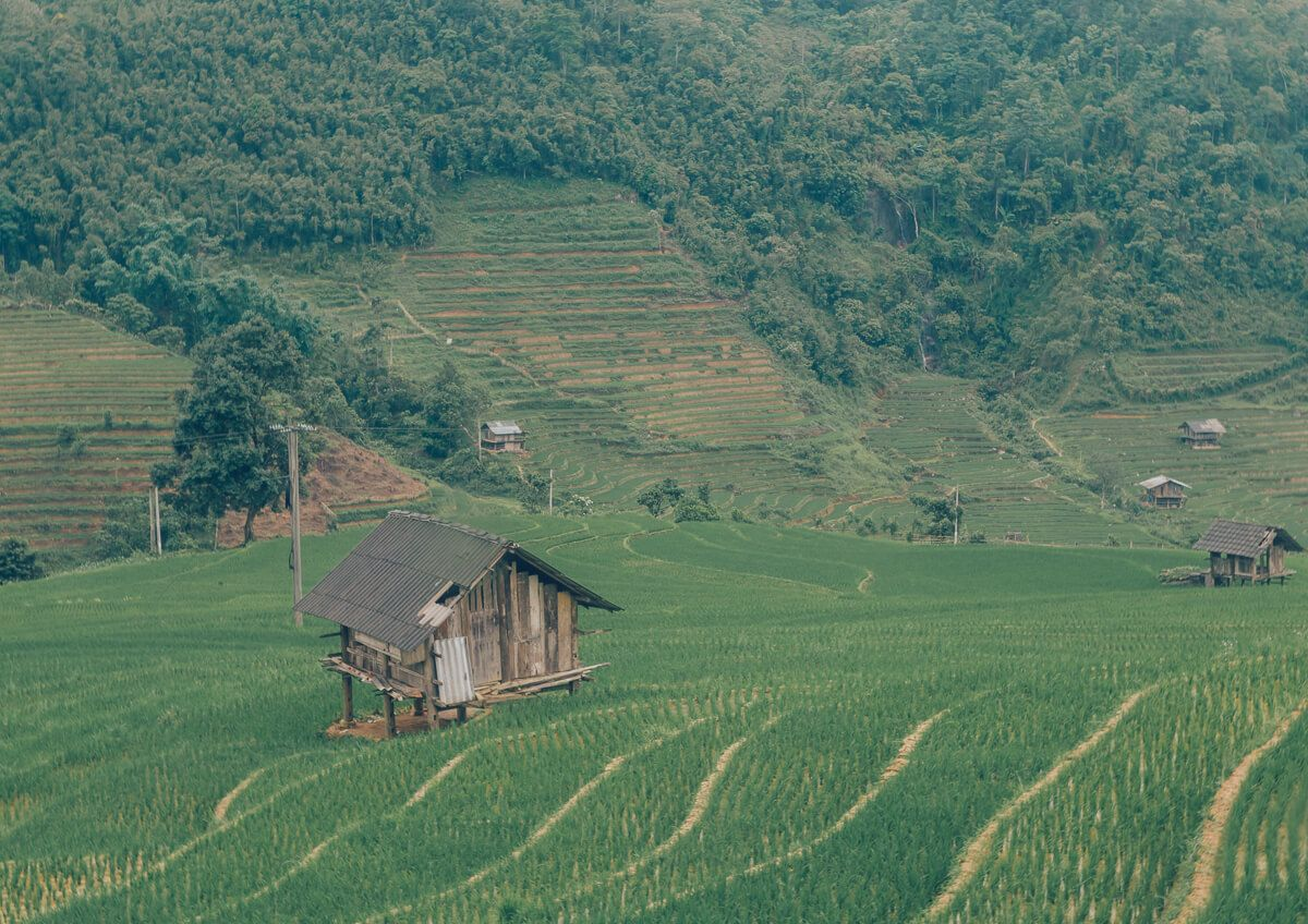 Rice fields in Sapa, Vietnam