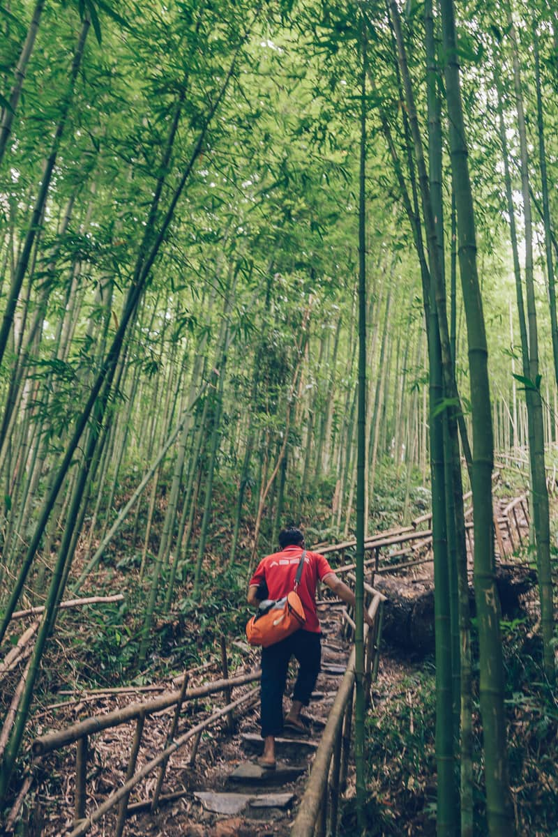 Bamboo Forest, Mu Cang Chai, Vietnam