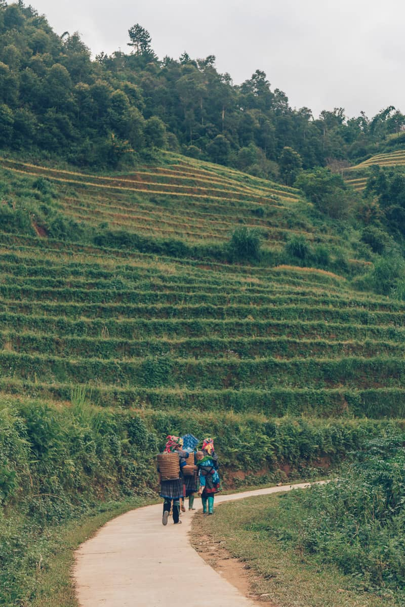 Mam Xoi Viewpoint, Mu Cang Chai, Vietnam