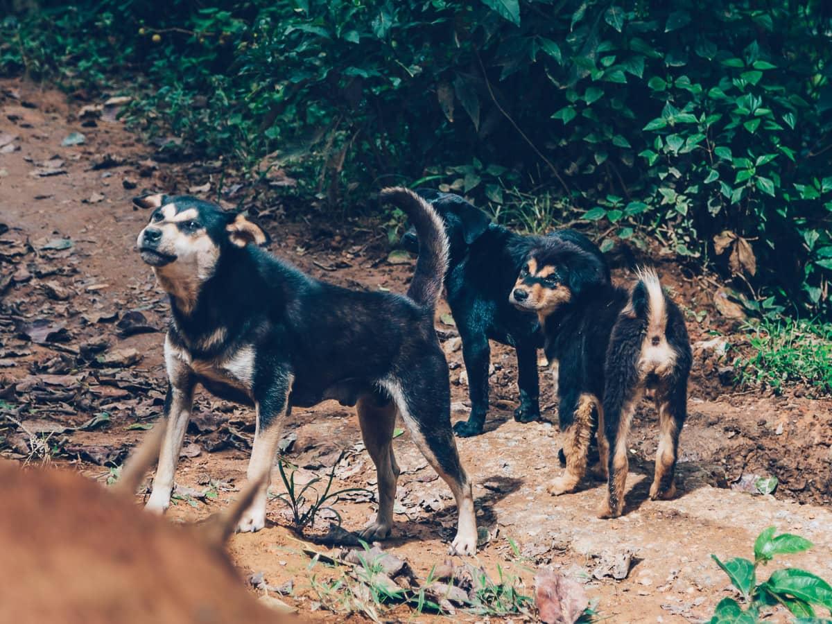 Animals in Mu Cang Chai, Vietnam