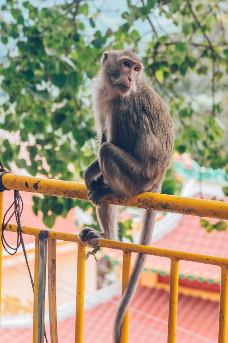 Monkeys at Ba Den, Vietnam