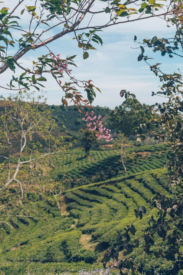 Cau Dat Farm, Dalat, Vietnam