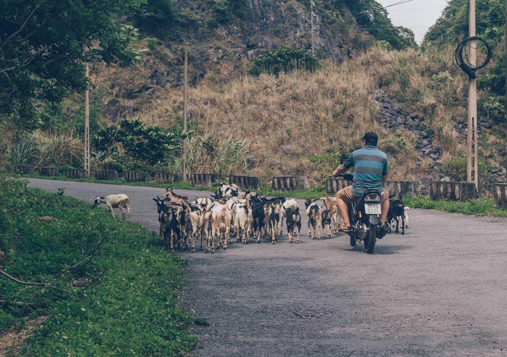 Motorbiking in Cat Ba Island, Halong, Vietnam